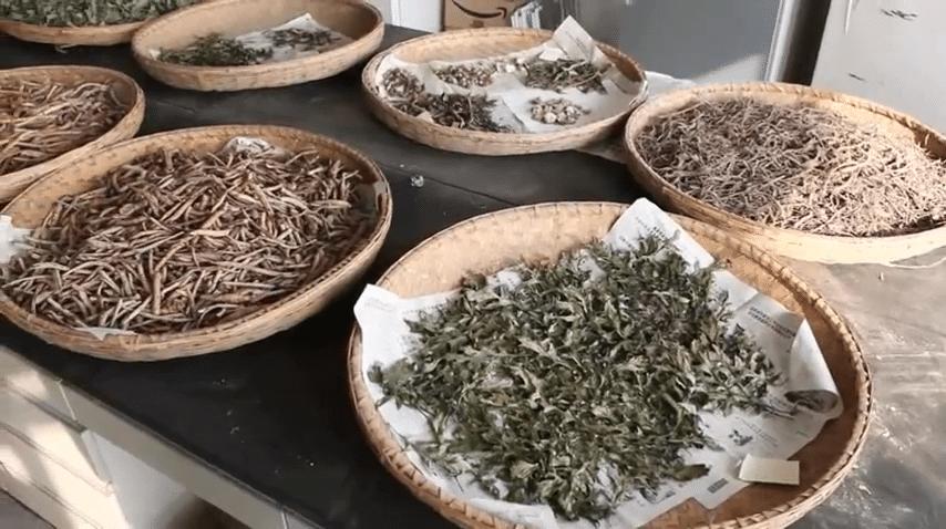 erbe medicinali cinesi