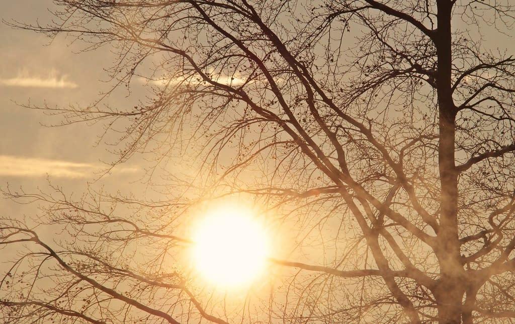 sole albero