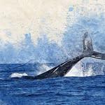 balene tuffo oceano