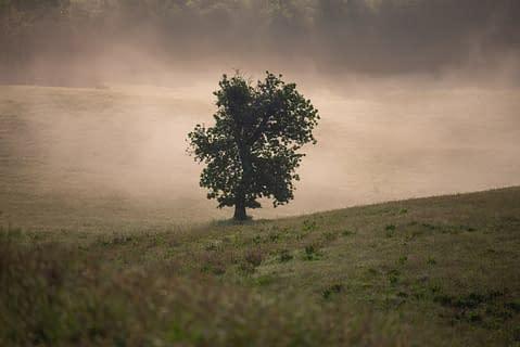 albero campo prato