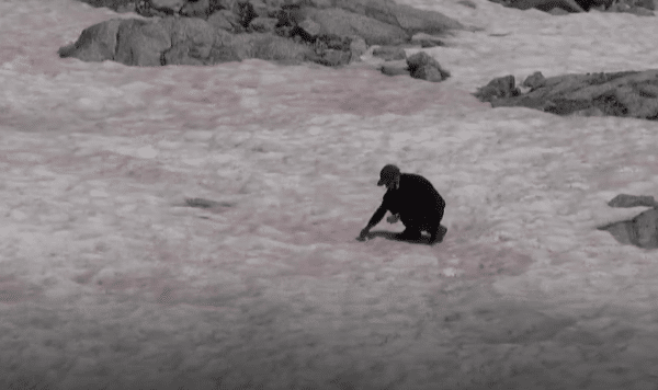 ghiaccio rosa Alpi persona