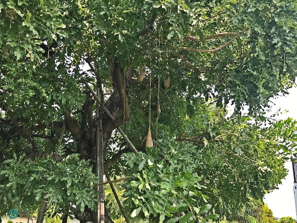 alberi delle salsicce
