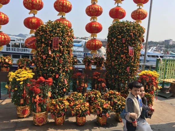 nuovo anno cinese alberi di kumquat