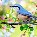 primavera ramo fiorito uccellino