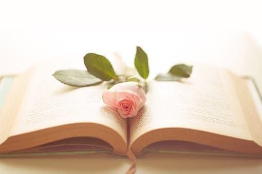 libro e rosa
