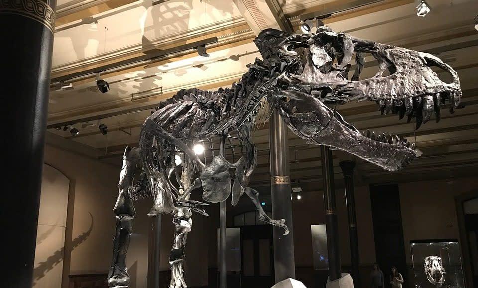 dinosauri ossa scheletro
