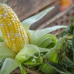 MTC e saggezza: alimentati secondo la stagione