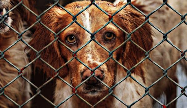 cane gabbia sguardo