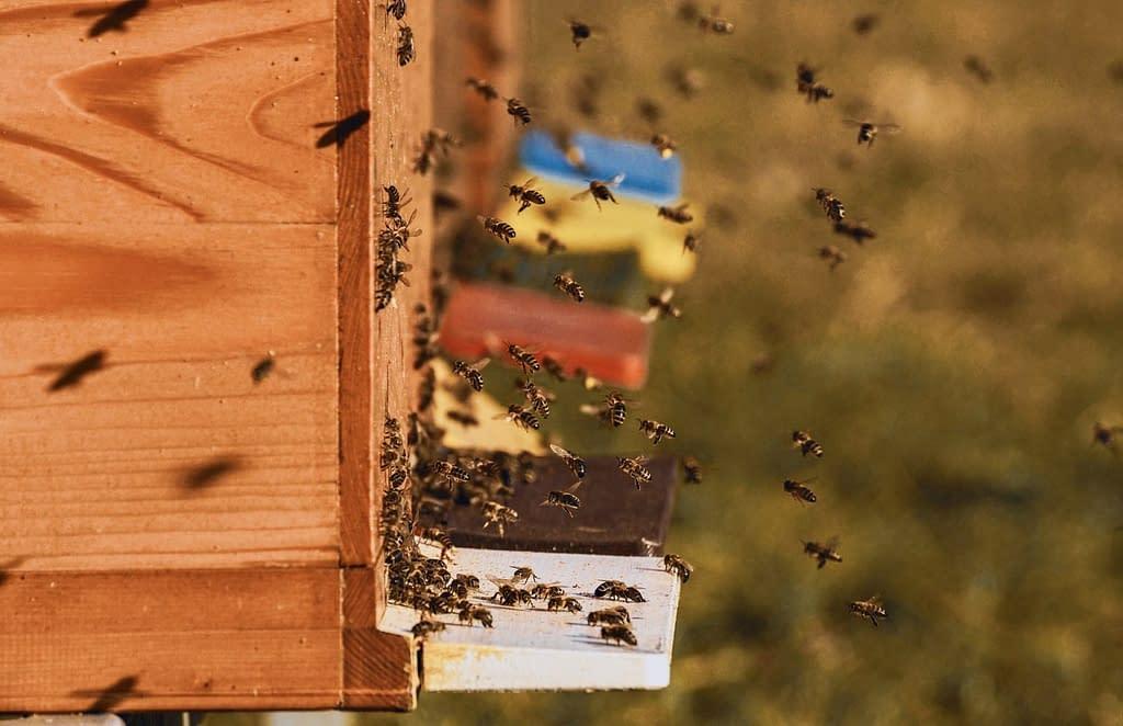 tradizione api casetta