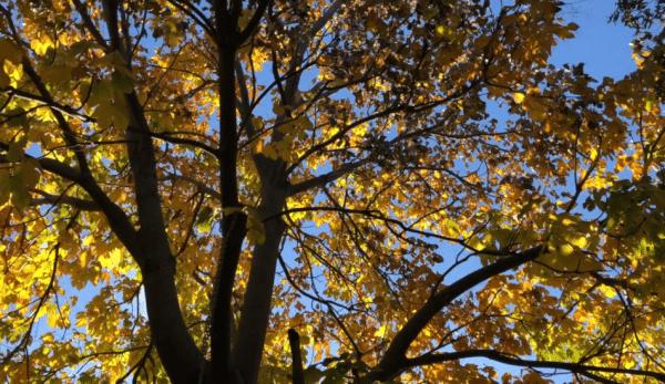 albero parasole