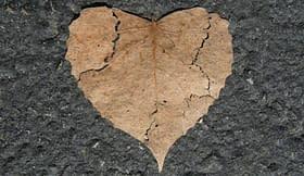 sindrome cuore spezzato foglia asfalto