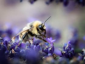 riportare in vita api