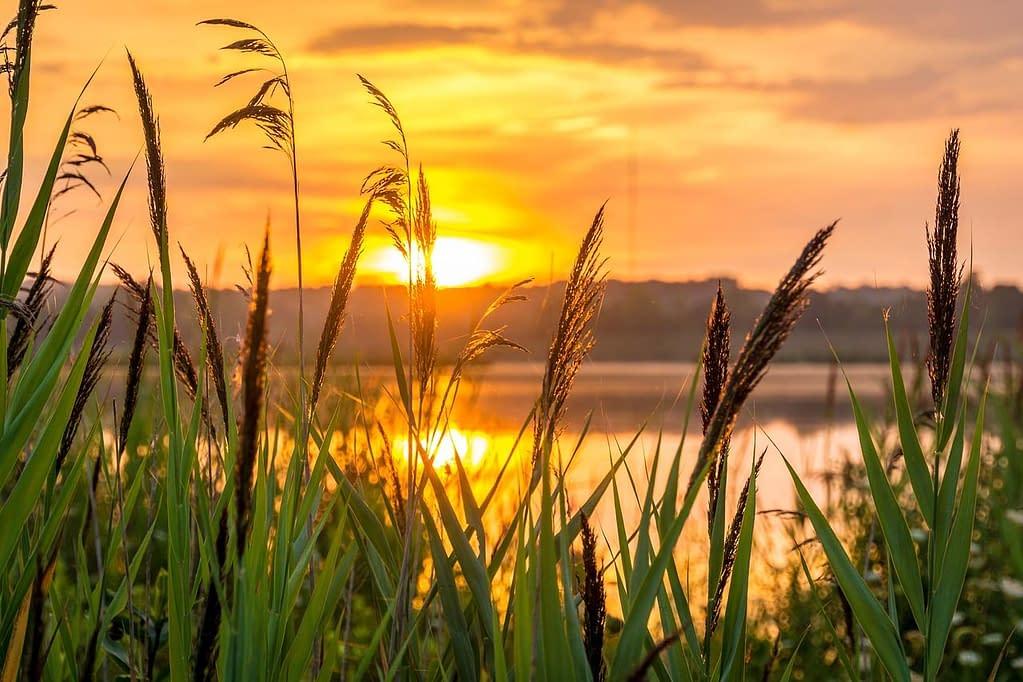 sole lago piante