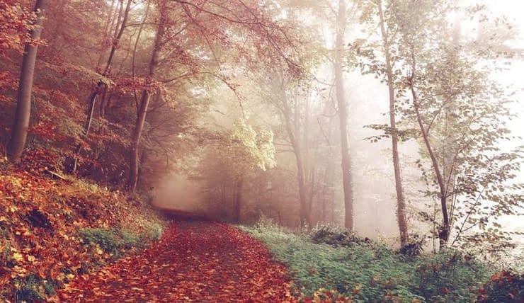 ambiente naturale bosco fiaba storia