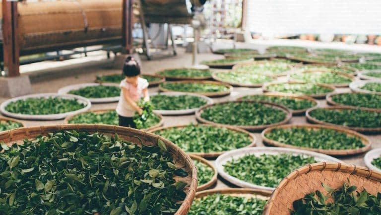 Ragazza circondata da numerosi cesti di tè