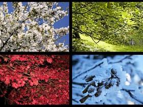 calendario lunisolare stagioni